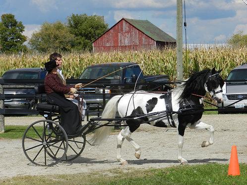 14 - Large Pony Working - Pleasure