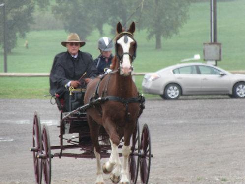 11 - Horse Working - Pleasure