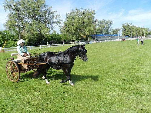 23 - Small Pony Reinsmanship