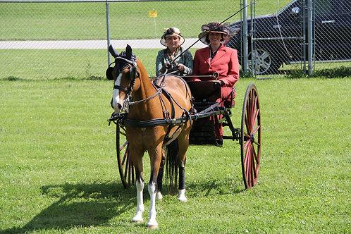 56 - Hackney Horse or Pony Pleasure