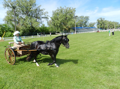 3 - Small Pony Turnout