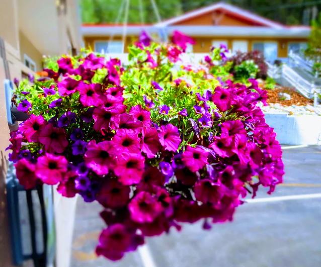 Flowers.webp
