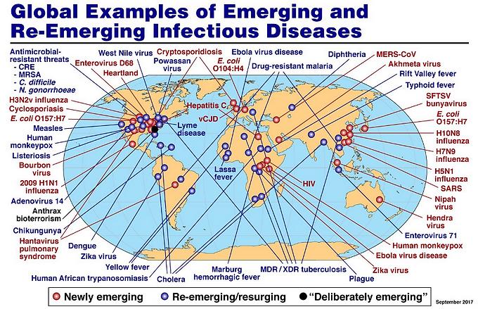reimerging disease.png