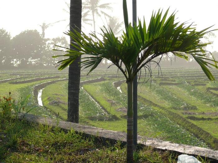 Indo : de Kuta à Ubud