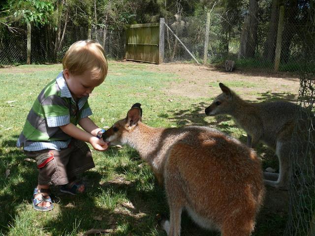 Magic Cams' : Brisbane to Melbourne