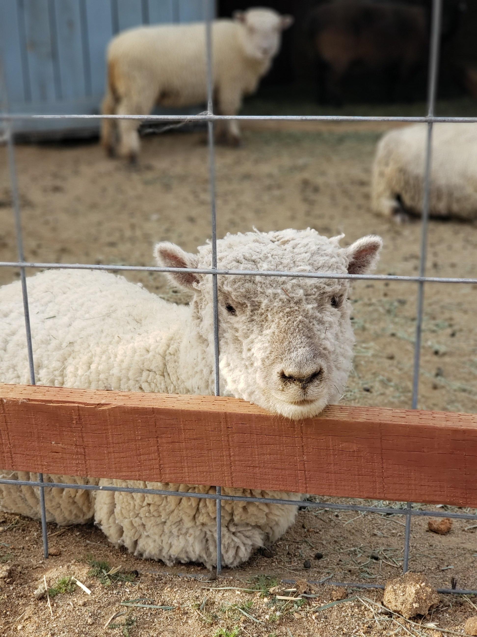 Open Farm Fridays