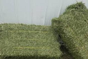 Donate 1 Bale of Bermuda Hay for Sheep & Horses