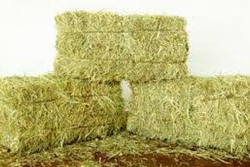 Donate 1 Bale of Orchard Hay for Buddy