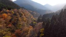 【山の禮讚】  Tottori Wasabi Farm
