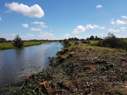 Tuhonohono Post Clearing Pre Planting