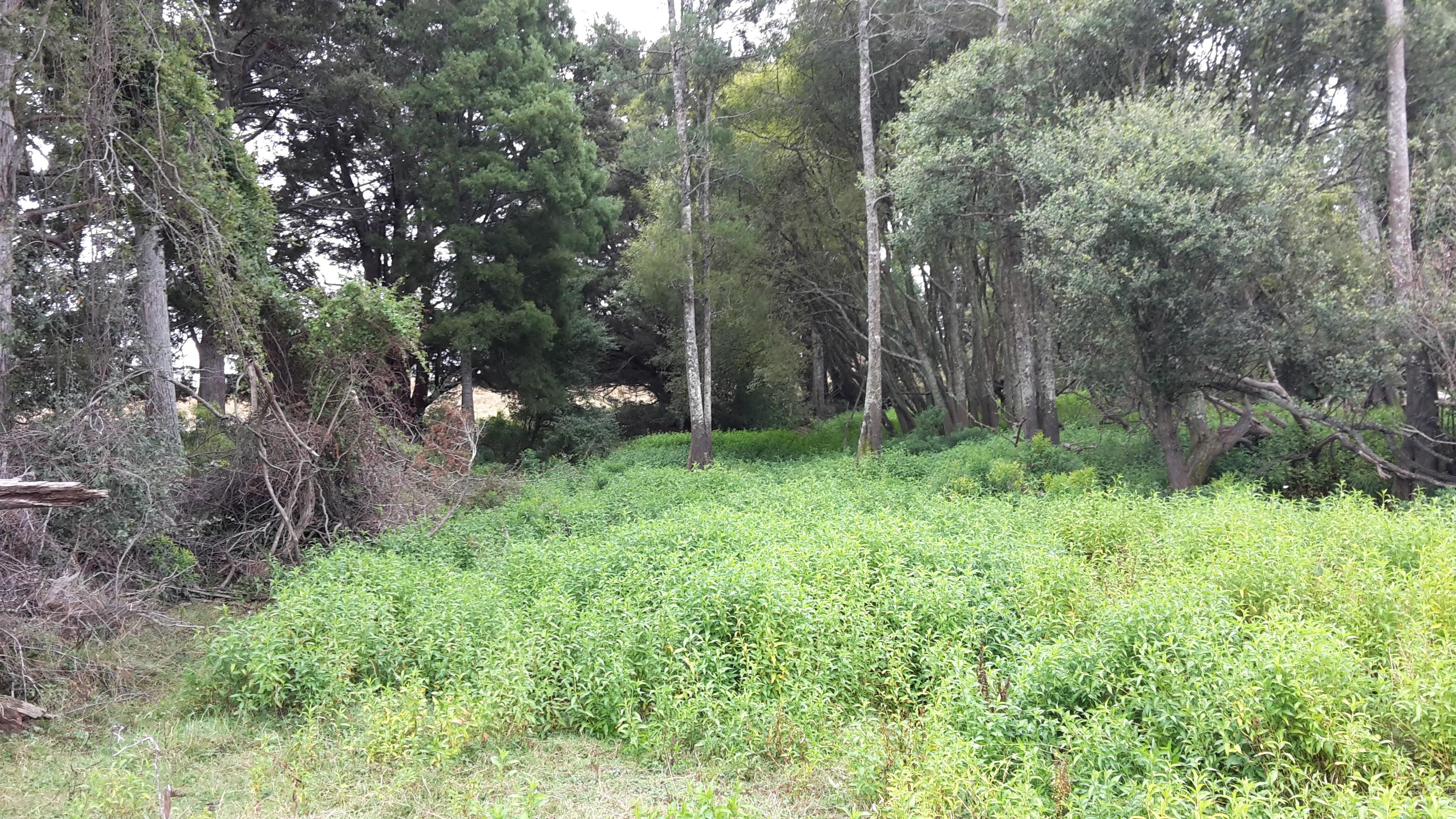 Mangawara Stream Pre Planting