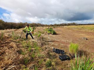 2021 PLANTING STARTS AT LAKE WAIKARE