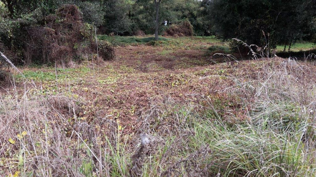 Te Onetea Stream Extension Post Sprayout Pre Planting
