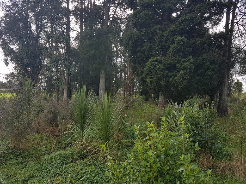 Mangawara Landon Oxbow Post Planting
