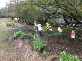 Getting Involved: Genesis Energy And Telecom Get Stuck In At Planting Day