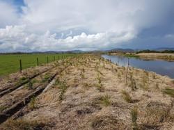 Tuhonohono Post Planting