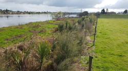 Huntly Waterworks Post Planting