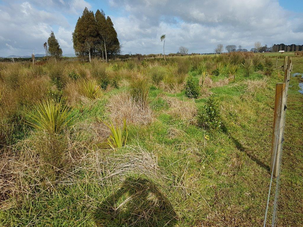 Lake Ohiniwai Recreational Reserve Post Planting