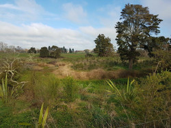 Mangawara McConnell Rd Post Planting
