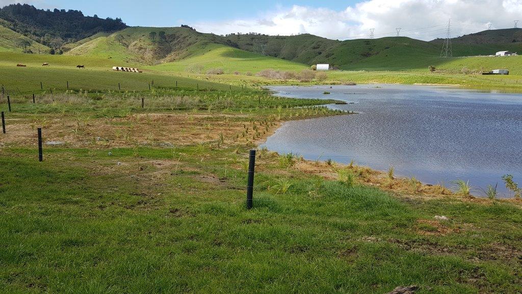 Hickey Farm Post Planting