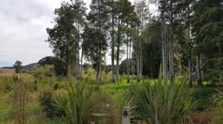 Mangawara Stream Post Planting