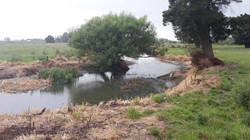 Mangawara Tuna & Wildlife Pre Planting