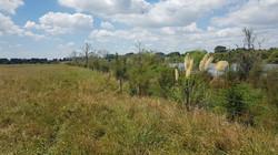 Hakarimata F Post Planting