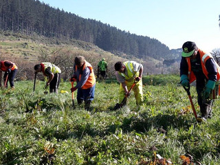 Let the planting begin! Waikato RiverCare projects ready for a makeover