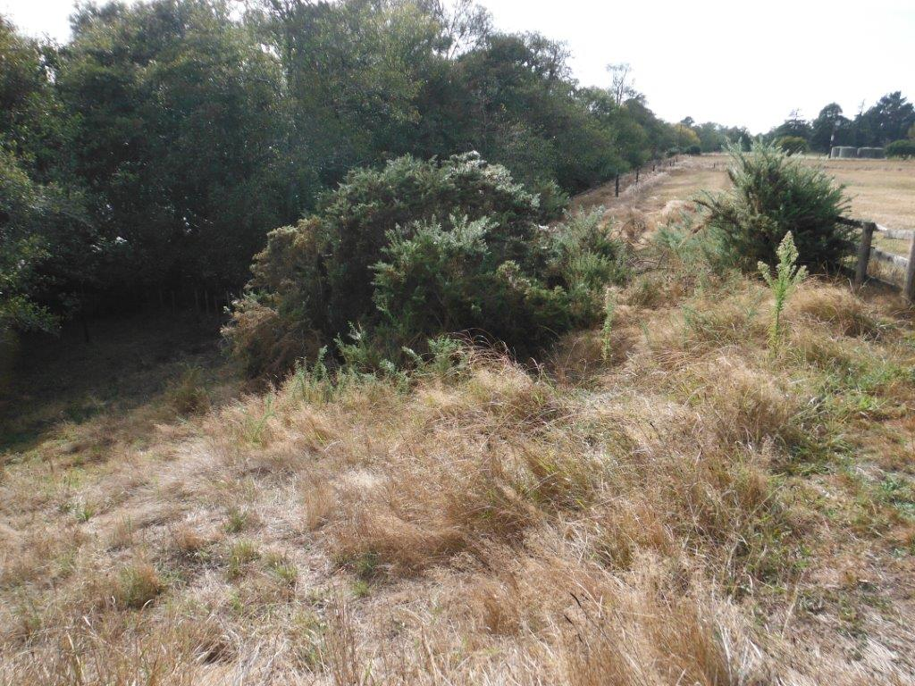 Te Awa River RIde (Stage II) Pre Planting