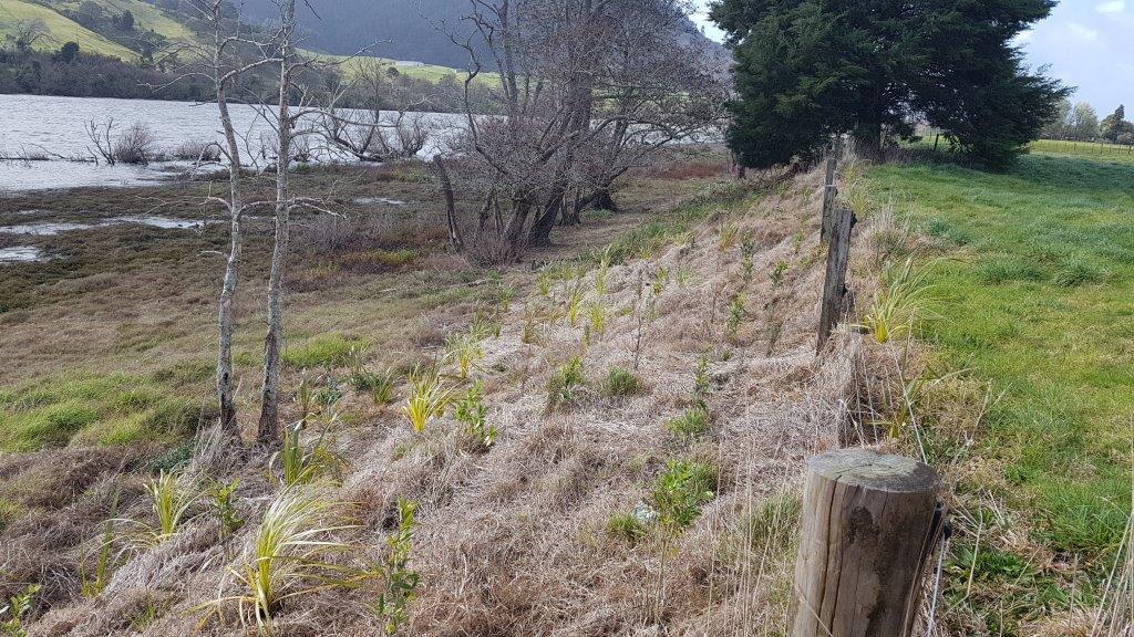 Hakarimata G Post Planting