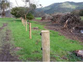 Posts and wire = protection for our plants