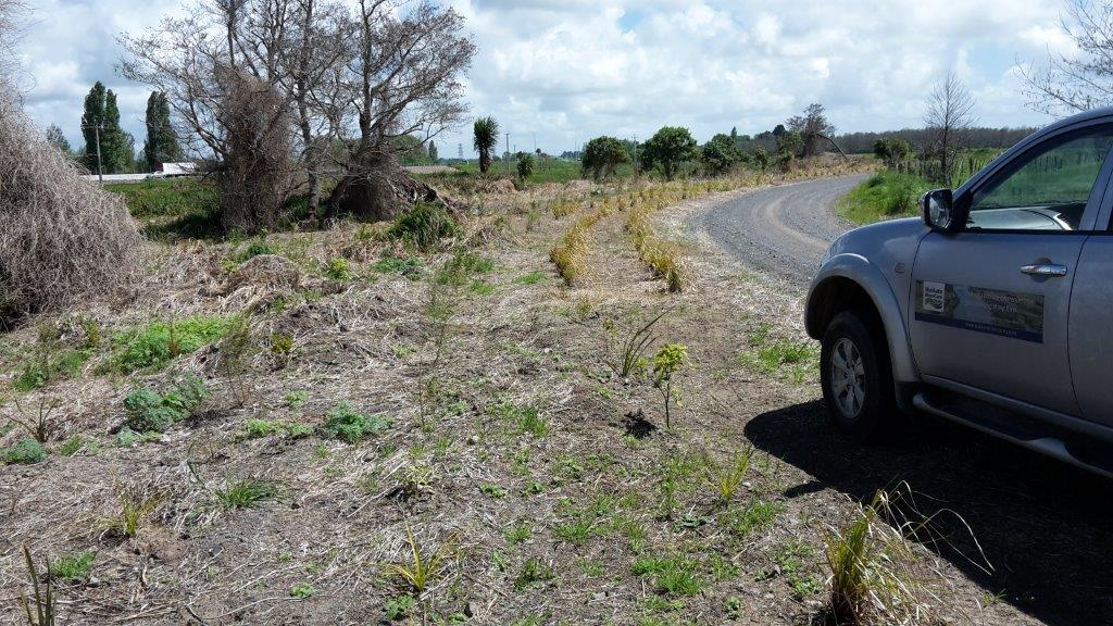 Te Onetea Stream Extension Post Planting