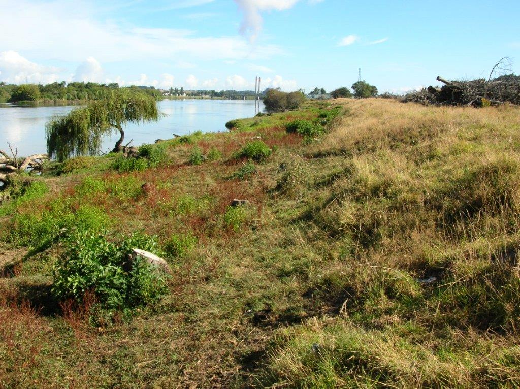 Raahui Pookeka Pre Planting.jpg