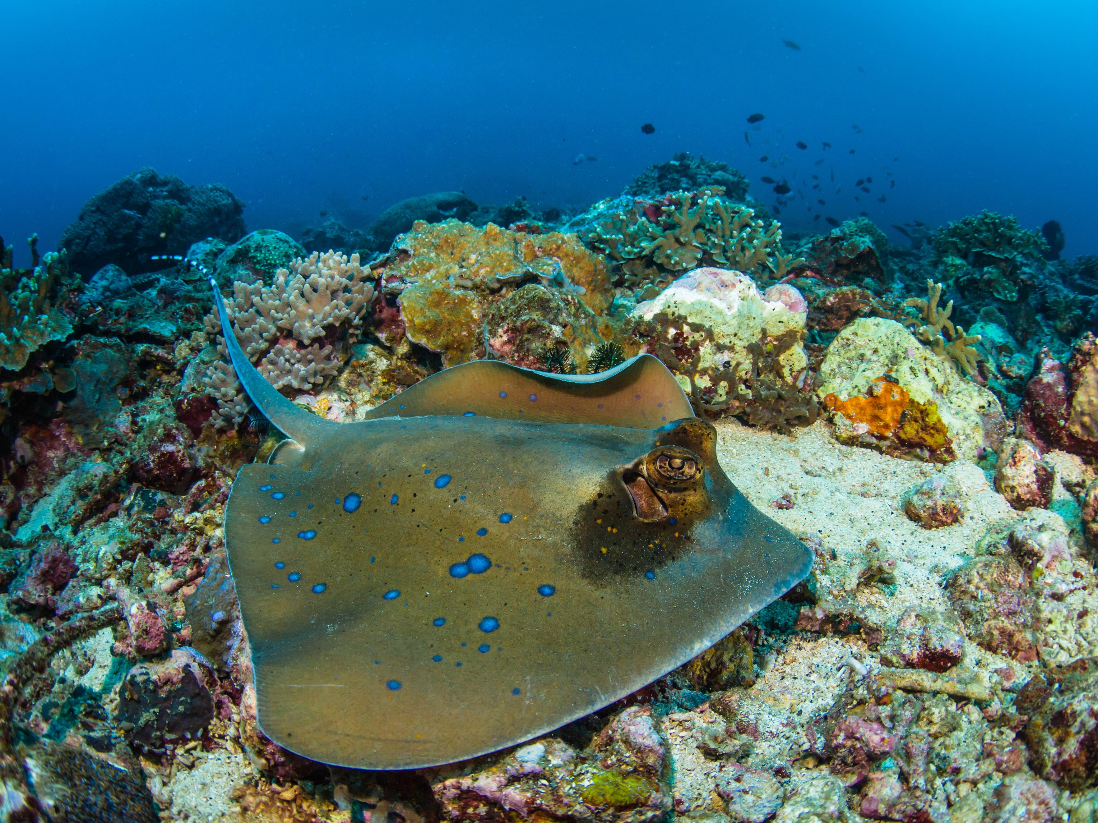 Underwater Photographic Assignment