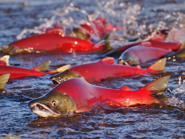 The Race Upstream