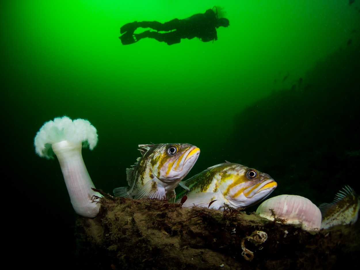 1st Place, North Pacific Research Board Photo Contest (2015) and 1st Place, Salish Sea In Focus Photography Contest (2018)