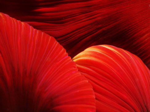 Anemone Mouth