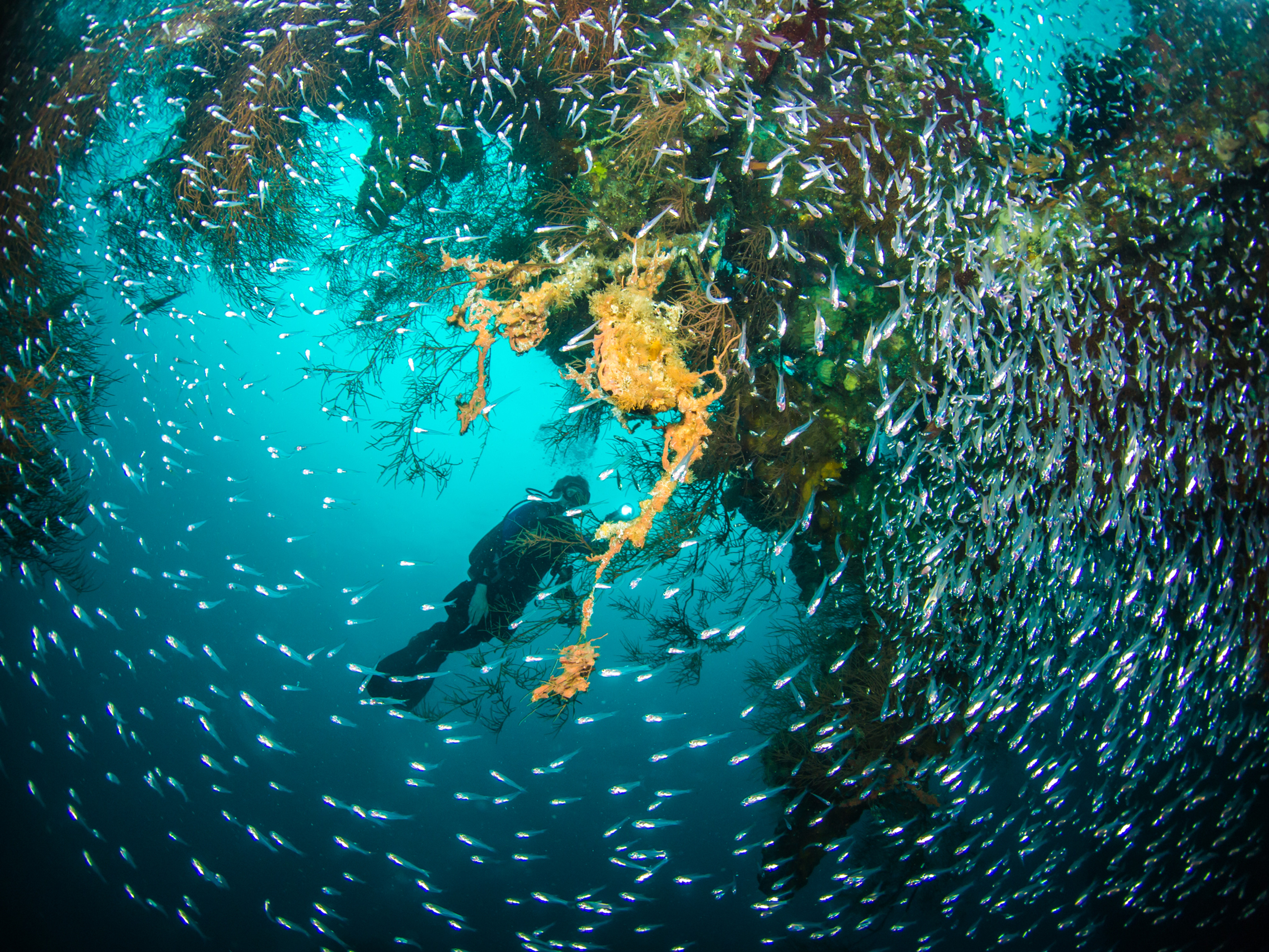 Underwater Photography Class