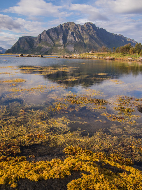 Lofoten Intertidal