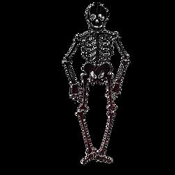 Cartoon Skeleton.png