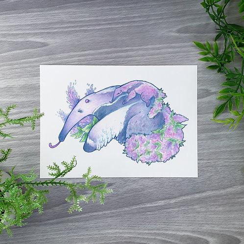 Amaranth Anteater Fine Art Print