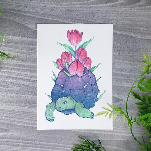 Tulip Tortoise Fine Art Print