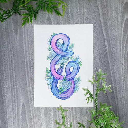Elder Flower Eel Fine Art Print