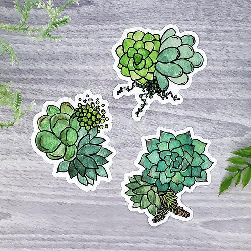 Green Succulent Vinyl Sticker Set