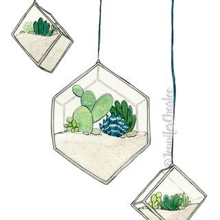 HangingSucculents1_Watermark.jpg