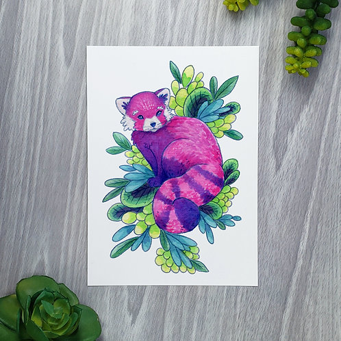 Red Panda Fine Art Print