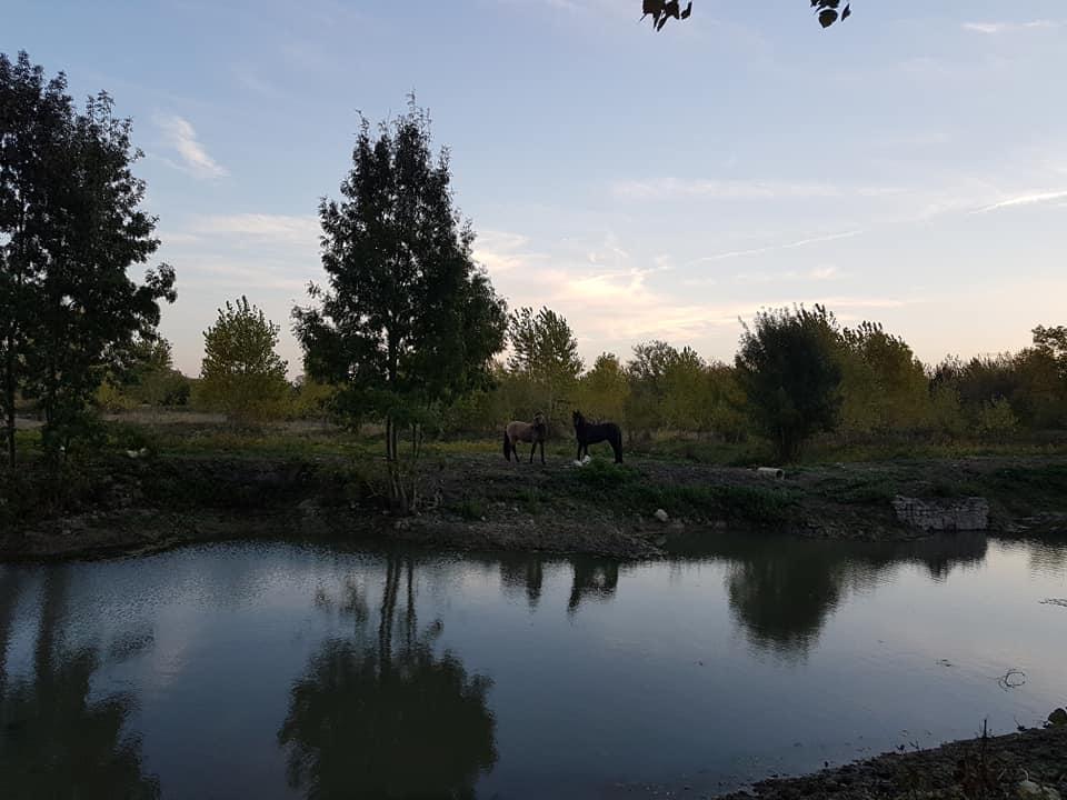 les chevaux à l'étang