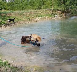 un petit bain pour Gellad