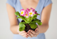 close up of woman's hands holding flower
