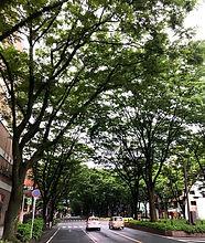 定禅寺通り.jpg